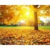 Сценарий осеннего праздника «Осень –дивная пора!»