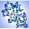 """Летнее развлечение """"Путешествие на остров бабочек"""""""