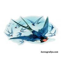 Сценарий музыкального развлечения «Птицы Весны»