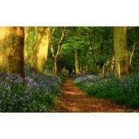 """Интегрированное занятие """"Весенняя прогулка в лес"""""""